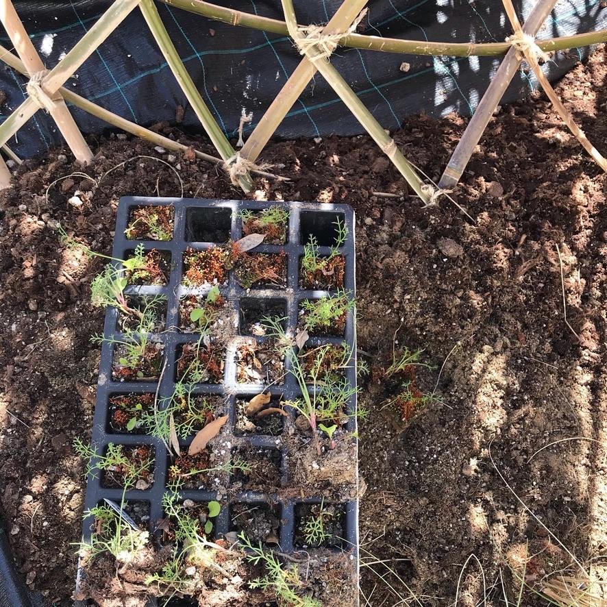 4.GardenProcess8